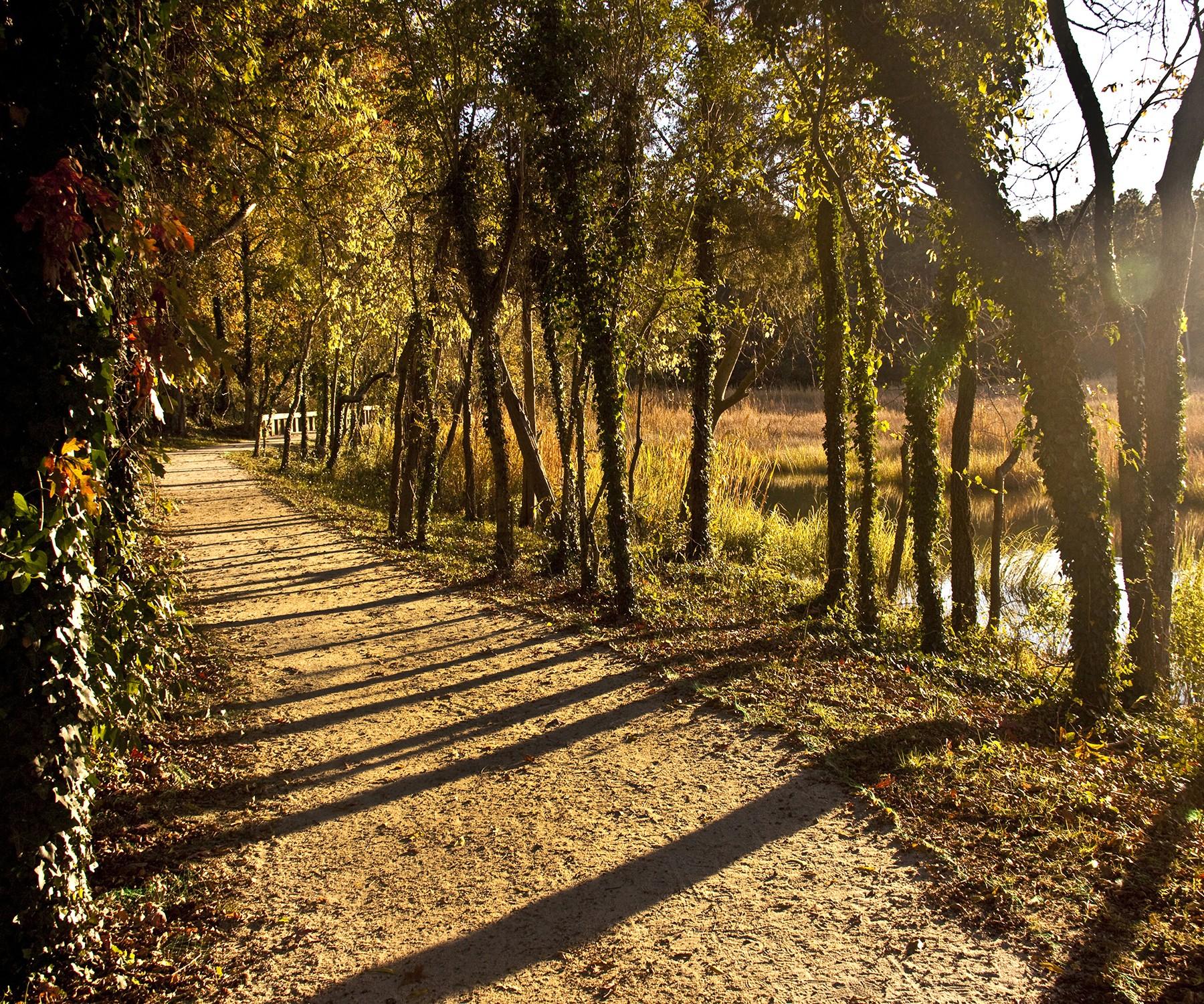 Windsor Castle Park